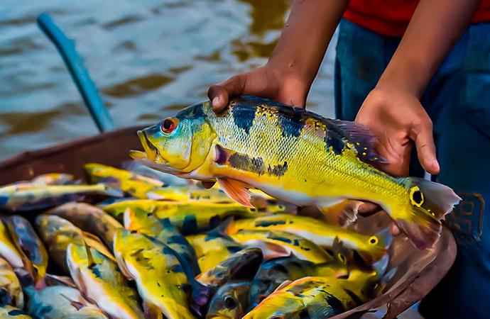 Pracuúba se prepara para mais um Festival do Tucunaré