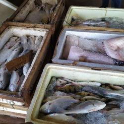 Batalhão Ambiental intensifica combate à pesca ilegal