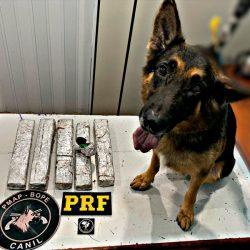 Bope e PRF interceptam envio de onze quilos de drogas para Oiapoque