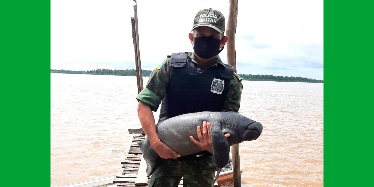 Filhote de peixe-boi é resgatado pelo Batalhão Ambiental