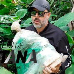 Quadrilha guardava 42 quilos de drogas em ilha do outro lado do Rio Amazonas