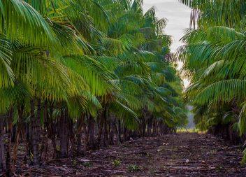 Governo do Amapá libera R$ 8,5 milhões para a agricultura familiar